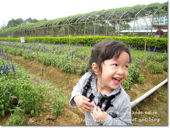 980419新屋花海農場026.JPG