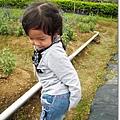 980419新屋花海農場028.jpg