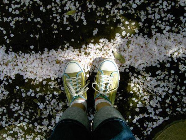 地上的凹陷處自然而然就積起了花瓣
