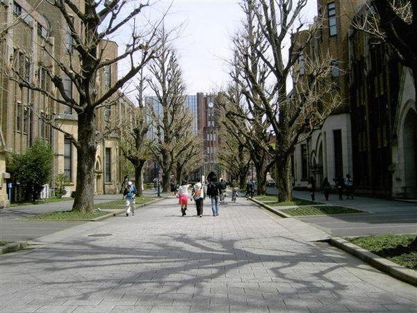 通往安田講當的銀杏大道