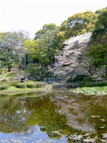 皇居裡其實沒有幾顆櫻花