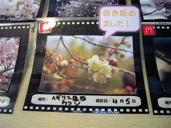 逛到新宿御苑...在公布欄有今天開花的花種