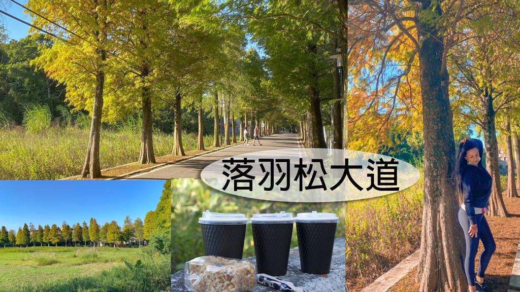 落羽松大道_201101_0.jpg