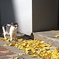 連貓咪也在散步曬太陽了~