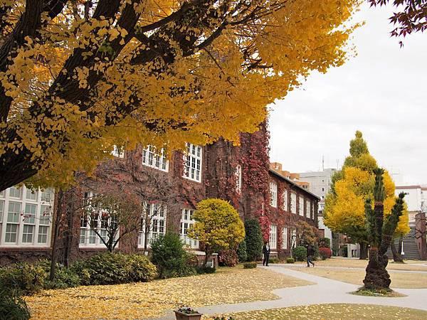 立教大學真的超美