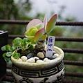 許多植物都長得挺吸引人的