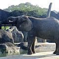 大象在吃鼻子