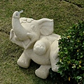 好可愛的大象阿!