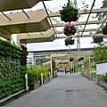 綠築曉徑花之隧道