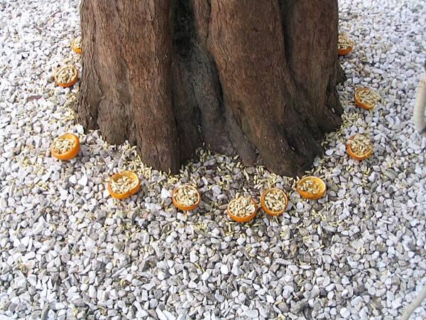 神祕環樹柳丁