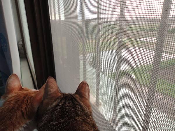 窗邊的喵咪