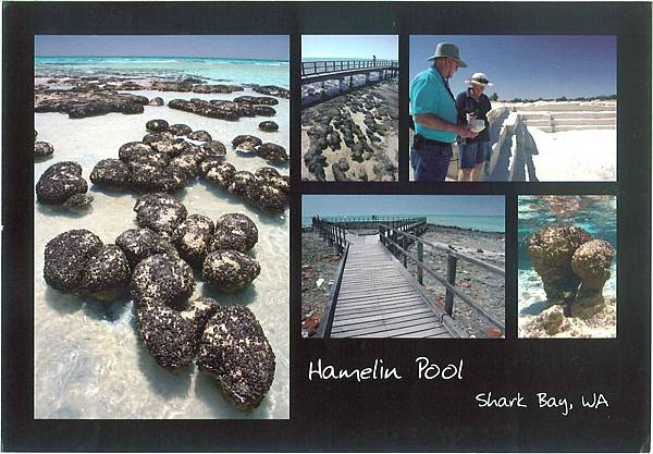 Hamelin Pool_ Shark Bay World Heritage Site, Western Australia