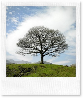 Single Tree Lake District Near Little Langdale England