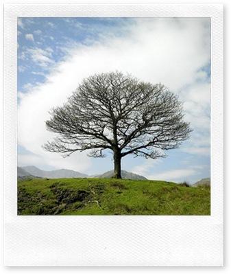 Single Tree Lake District Near Little Langdale England