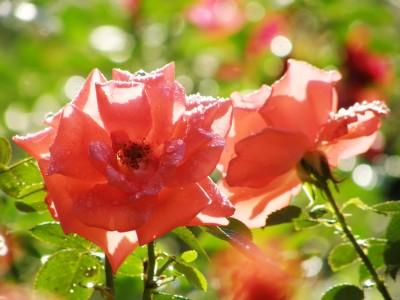 在心中種花
