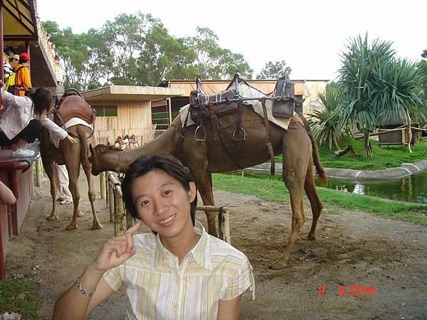 我的後面是駱駝哦