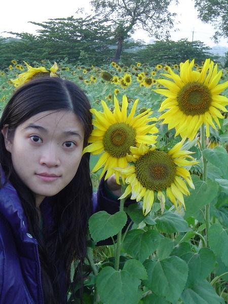 向日葵花海8