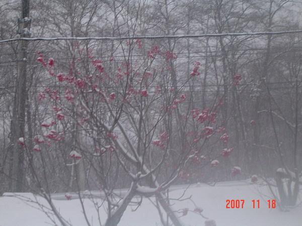黑部立山雪景16
