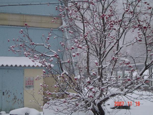 黑部立山雪景19