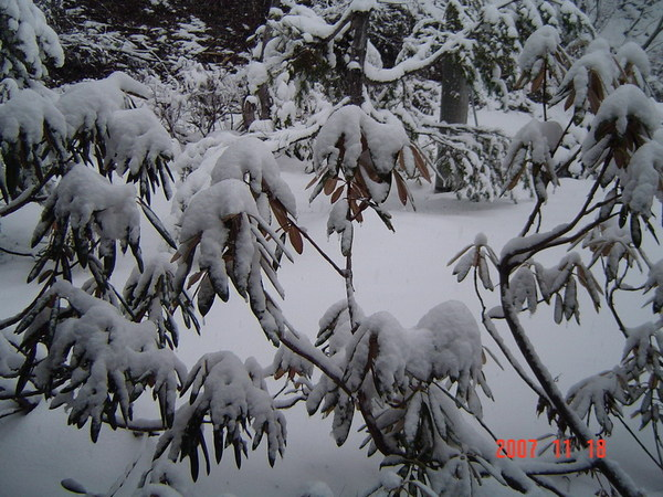 黑部立山雪景20