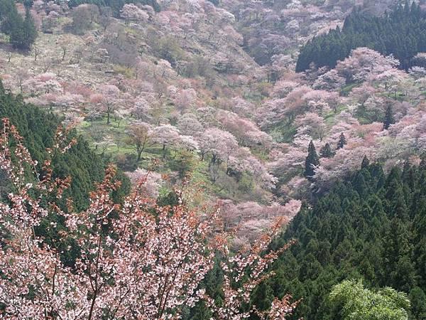 3吉野山.jpg.jpg