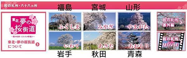 夢之櫻街2.jpg