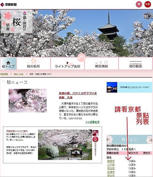 京都滋賀櫻情報1.jpg
