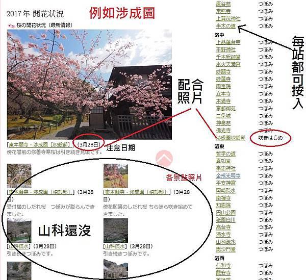京都滋賀櫻情報2.jpg