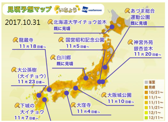 20171031銀杏.png