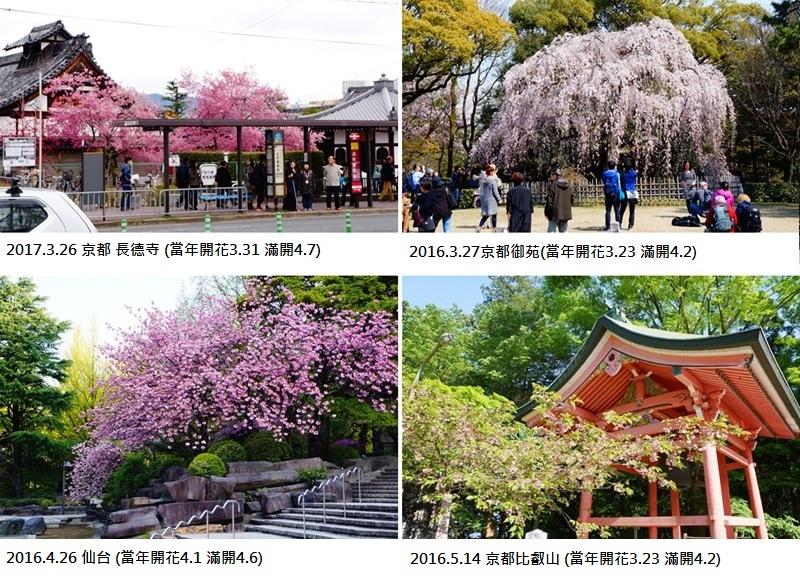 cats不在櫻前線上花卉.jpg