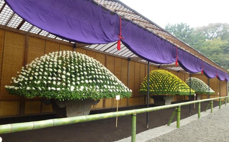 1015菊花壇展2.png