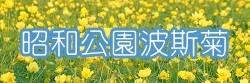 昭和菊.jpg