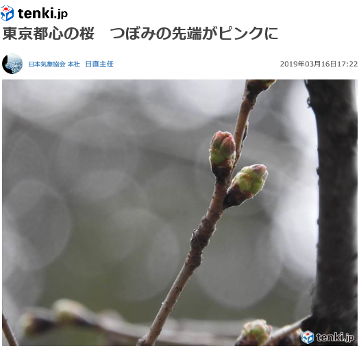 櫻花前線東京花芽.png