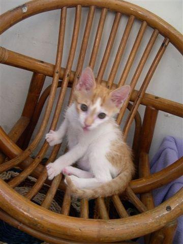 這椅子是他最近的最愛寶座