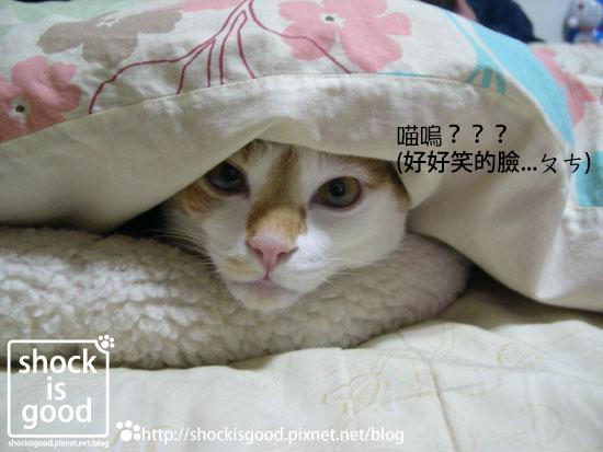 201001-Mochi 喵 (1).jpg