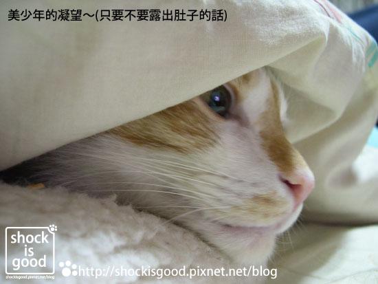 201001-Mochi 喵 (3)