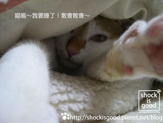 201001-Mochi 喵 (5).jpg