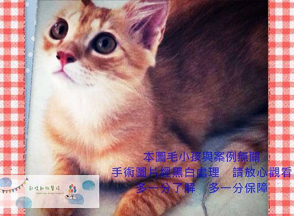 可愛動物照 (6).jpg
