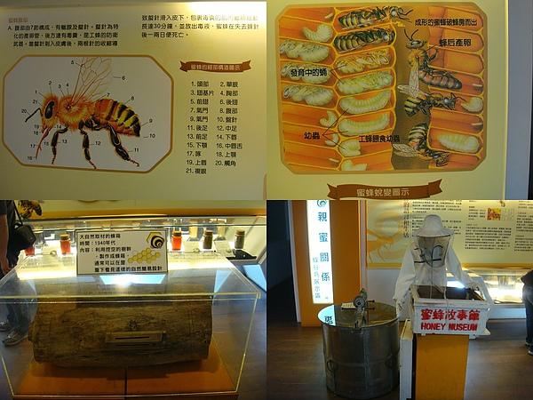 蜜蜂的介紹.jpg