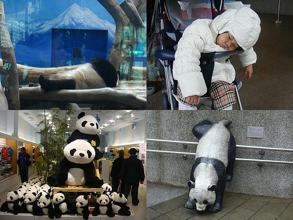 熊貓睡覺中.jpg