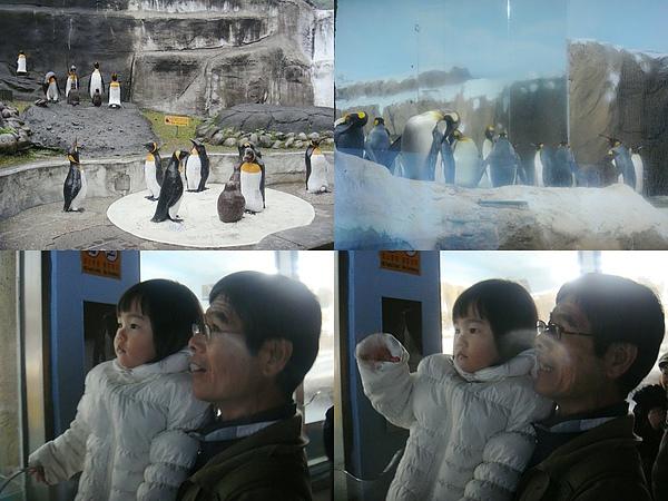 企鵝館.jpg