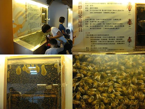 蜜蜂的家庭成員.jpg