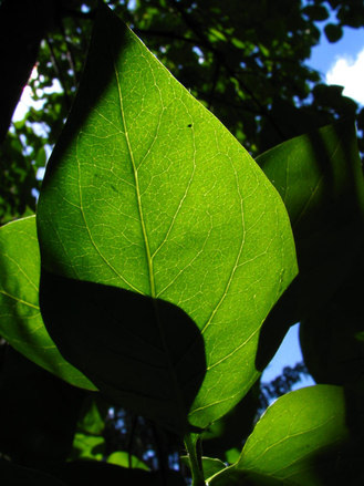 植物病害分類-依發生部位