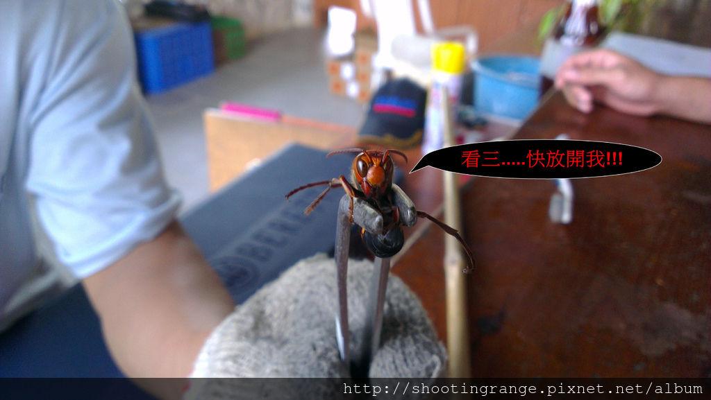 虎頭蜂 (2).jpg