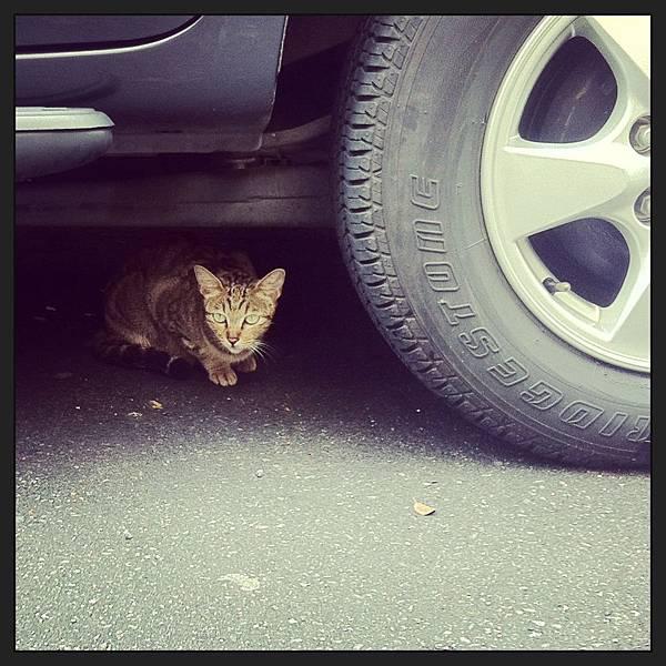 車輪與小貓