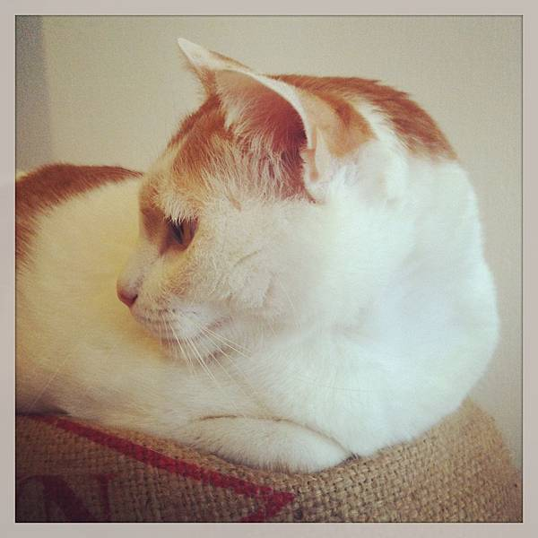 咖啡實驗室看版貓