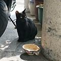 咖啡實驗室門口的小黑貓