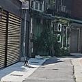 貓獨行小巷