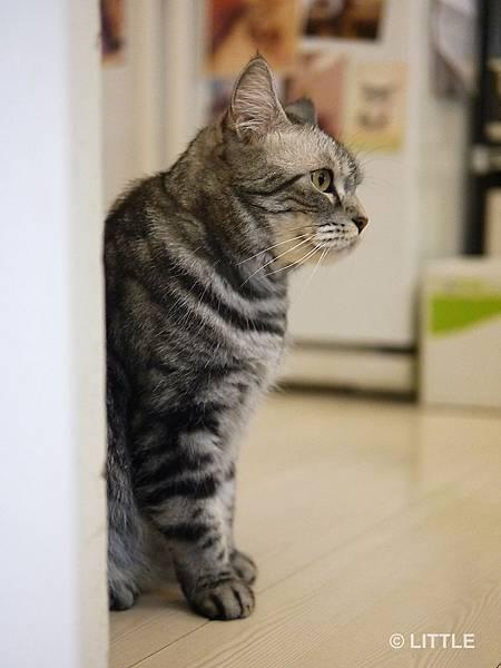 咖啡實驗室看板貓
