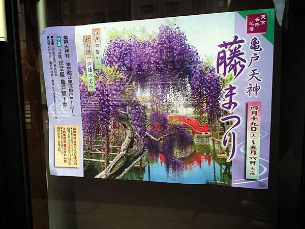 d202龜戶天神社紫藤.jpg